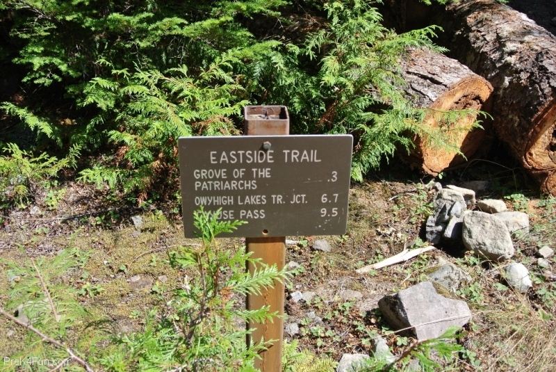 Grove of the patriarchs, Mt.Rainier trail head