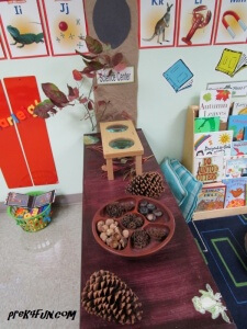 Letter C Science Fall The leaves changing color, pine cones, Acorns and hazelnuts
