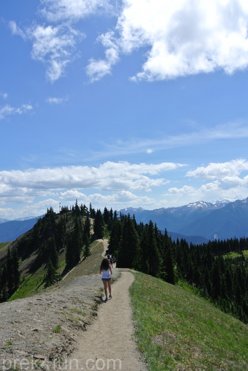 hurricane ridge trail up view