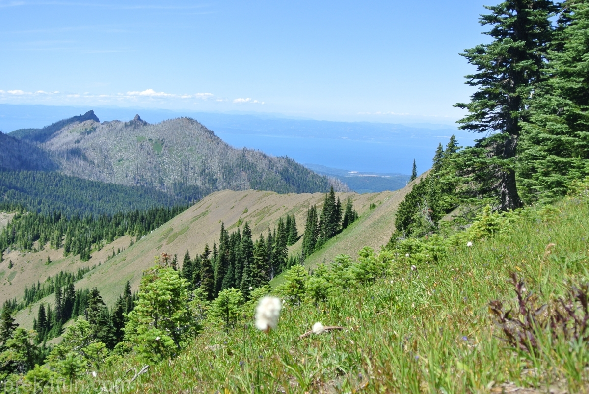 hurricane ridge ocean view